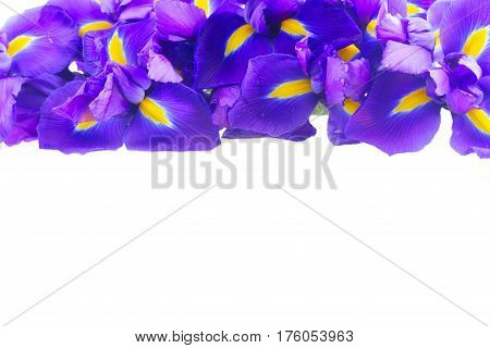 Blue iris flowers bouquet border isolated on white background