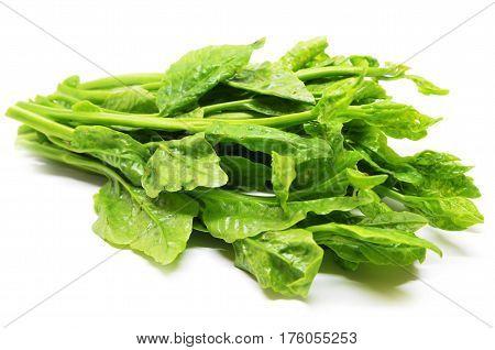 Green Ceylon Spinach