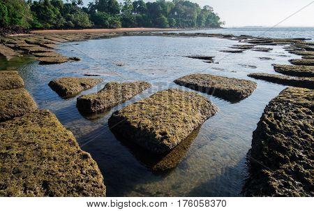 Gastropod Fossil Shell Beach, 75 millions years old shell cemetery, Krabi, Thailand