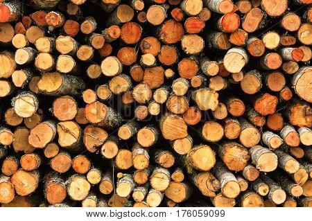 Stack of felled trees in the forest ready for transport. Timber industrial background