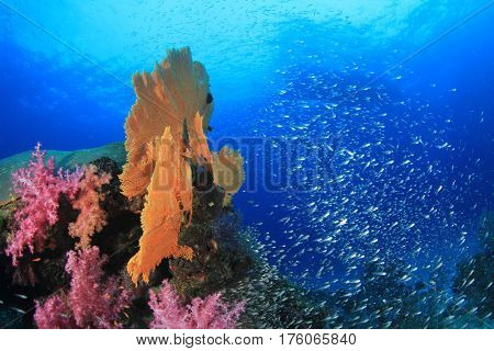 Dive boat over coral reef with fish