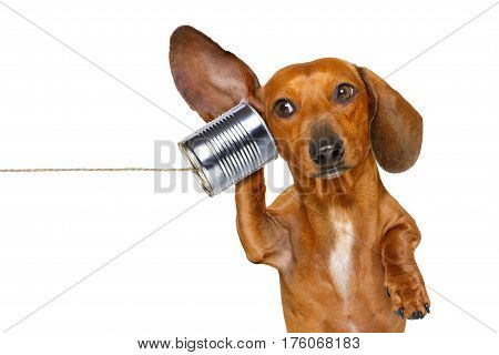 Dog On The Phone Listening Carefully