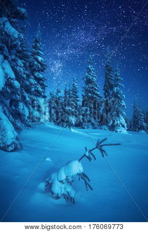Fairy Night Winter Forest