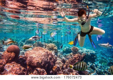 Snorkeler diving along the brain coral. Maldives Indian Ocean coral reef.