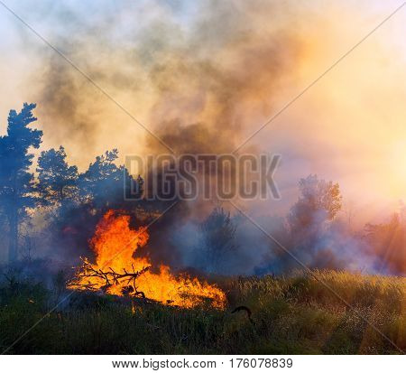 Forest fire burning Wildfire close up at day time