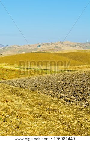 Wheat Fields on the Background of the Modern Wind Turbines in Sicily