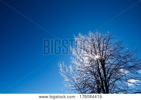 Iced Canadian winter tree with a clear blue sky. Levis, Quebec, Canada.