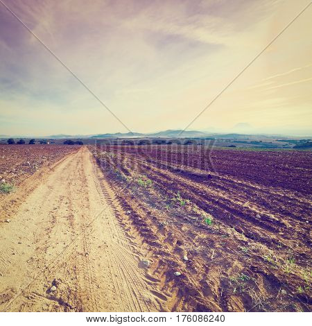 Cotton Field after Harvest at Sunset in Spain Instagram Effect