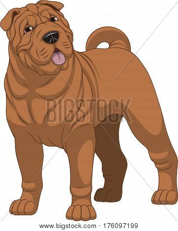 Vector illustration, funny purebred dog, shar pei, on a white background