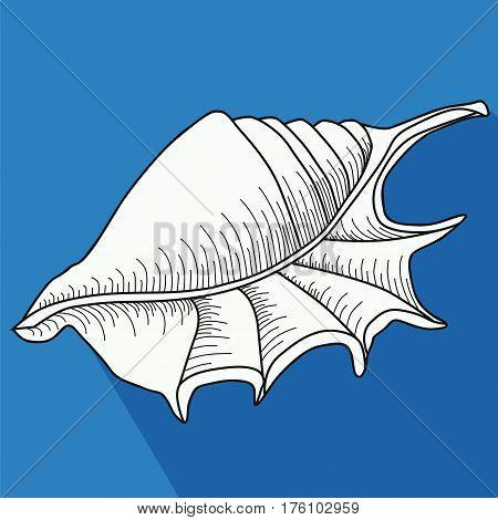 Sea shell. Line work. White Sea  shell snail on a blue  background.