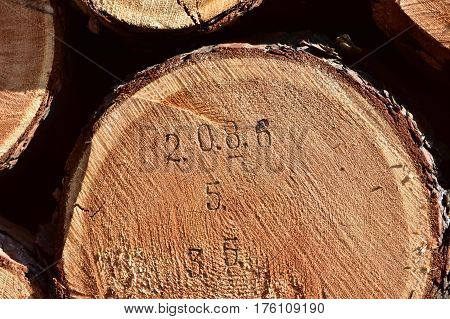 marking of tree trunks with cubic capacity before sale