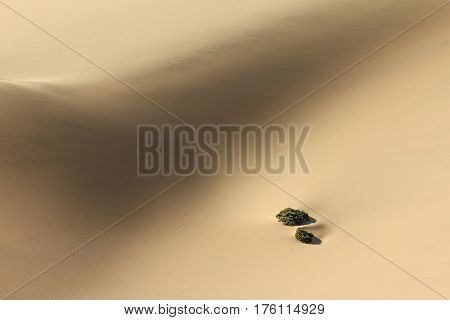 Plants in sand dune desert. Challenge to survive. Sand dune in african desert buries green bush.