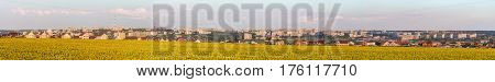 Large wide panorama of the southern residential district of Belgorod city. White city Russia. Skyline of the city on hills behind a sunflowers field.