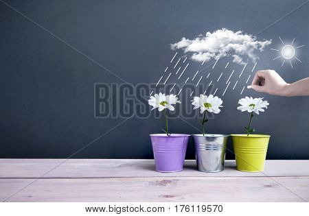 Spring daisies inside pots with clouds and rain being sketched on a chalkboard