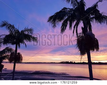 Palm tree silhouette against brilliant sunrise colors
