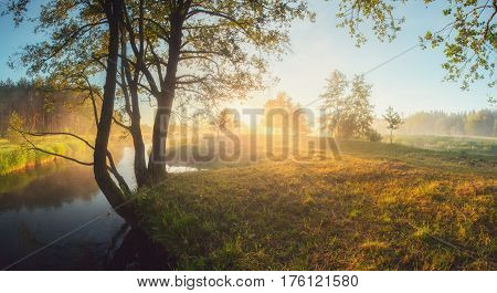 Sunny summer morning on meadow. Bright sun shines on green leaves. Green grass in morning sunlight. Summer sunrise background.