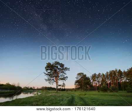 Night sky with stars over trees. Starry sky above green meadow. Real night sky with stars with milky way. Beautiful night background.