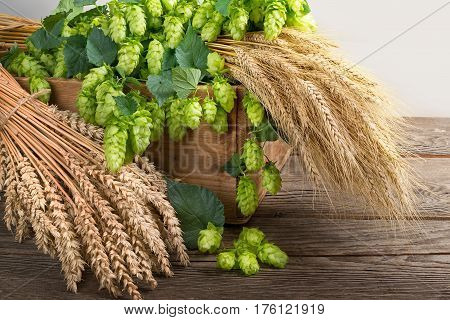 still life with hop cones barley and wheat