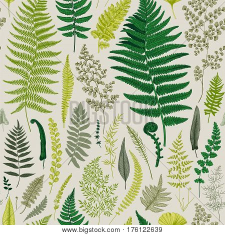 Seamless pattern. Ferns. Vintage vector botanical illustration.