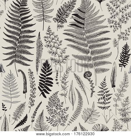 Seamless pattern. Ferns. Vintage vector botanical illustration. Black and white