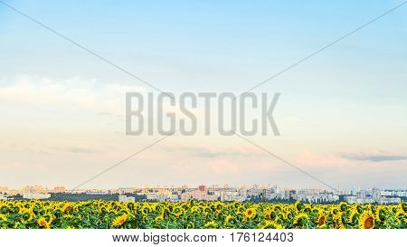Cityscape with view of the south residential district of Belgorod city Russia. Skyline over a field of sunflowers under a spacious sky.