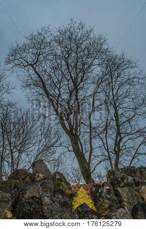 Nice Tree In Alexander Park In Tsarskoye Selo, Pushkin, Saint Petersburg