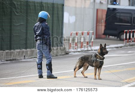 Trained Police Dog During Surveillance Along The Streets Of The