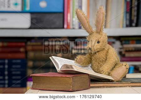 Rabbit Reading Books, Child's Reading, Learning Concept