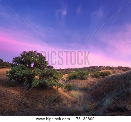 Colorful Night Landscape With Green Tree On The Hill