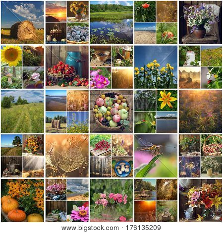 summer moments. images of summer nature scenery fruits and flowers. the sunsets and sunrises flowers and insects.