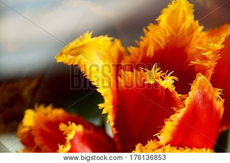 Tulip flower elements in a festive bouquet