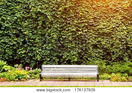White bench in a city Park on a background of a high wall with its green vineyard. Walking on Tallinn summer blooming garden on a warm August day. Baltic States Estonia Towers' Square