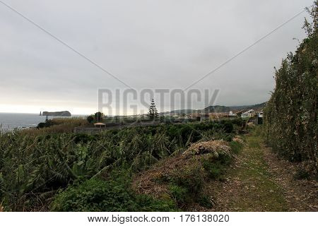 Trail, paths of the island of São Miguel Azores, Portugal