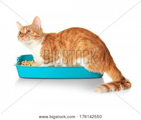 Foxy cat in plastic litter on white background