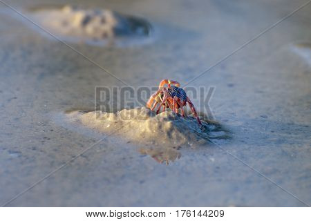 The little crab on a wet sand