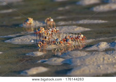 Small crabs in the wet sand closeup