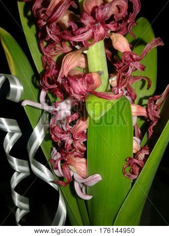 background beauty black close dark decoration decorative festive fine flowers gift green holiday leaves light nature occasion piece pink plant purple reflect ribbon stem trunk white wonderful world