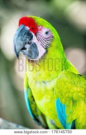 Green Ara Macaw Parrot Outdoor