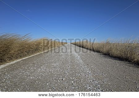 Dirt and gravel marsh grass enshrouded road along coastal wetlands on a bright sunny late winter day.