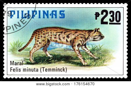 STAVROPOL RUSSIA - March 09 2017: A stamp printed by Philippines shows Dwarf cat or query Philippine animals circa 1979.