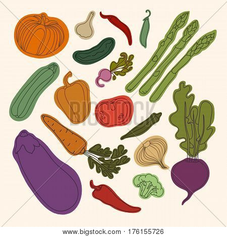 Collection of vegetables. Pumpkin, cucumber, tomato, radish, carrots, beets, asparagus, peas, garlic, onions, okra, eggplant, zucchini, peppers, broccoli. Vegetarian,useful, vitamin food.