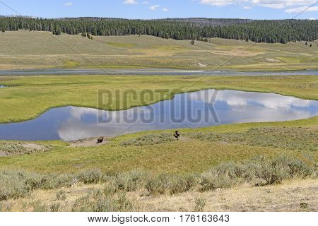 Hayden Valley and the Yellowstone River in Yellowstone National Park in Wyoming