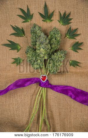 Small bouquet of fresh cannabis flowers (Mangolope marijuana strain) trimmed and wrapped in purple ribbon with small sugar leaves over burlap background