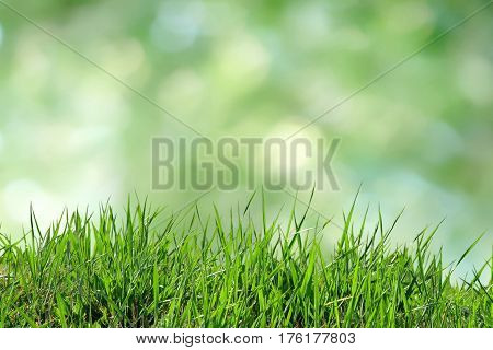 Green grass isolated on a vibrant blurry green yellow bokeh background