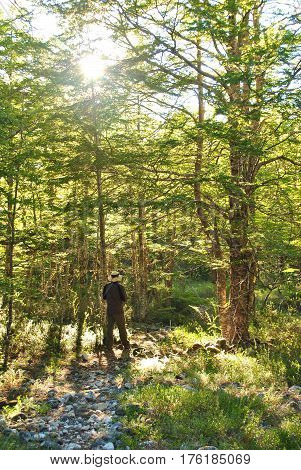 Walking into the wild / Contemplating the beauty of the forest / Hiking in the forest