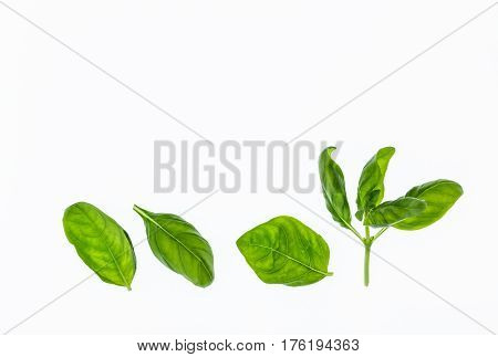 isolated sweet basil leaves on white background with copy space