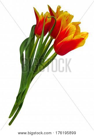 Bouquet of red-yellow tulips isolated on white with Clipping Path