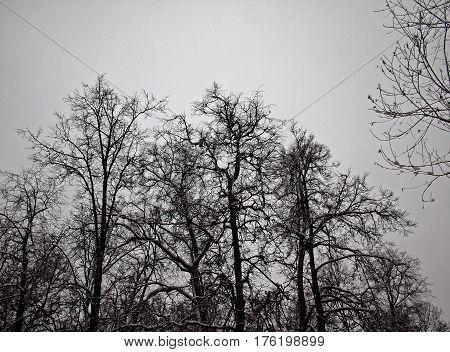 winter Park in Moscow, settlement Mosrentgen, Moscow new