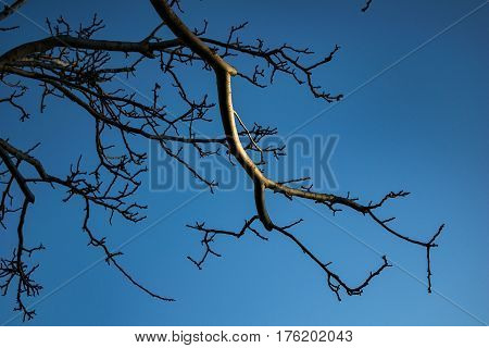 Barren branches exposed to the light of the sunset