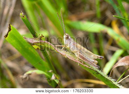 Little grasshopper sitting on a leaf .